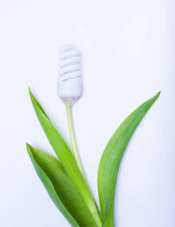 energy saving lamp a flower on white photo