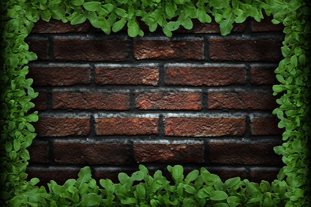 brick and leaves background Stock Photo - 9561194