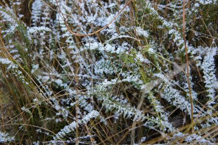 Close up photo of frosty morning grass, macro shot. Stock fotó