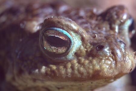 Frog Face Macro. Tailless amphibians. Defender of insect gardens.