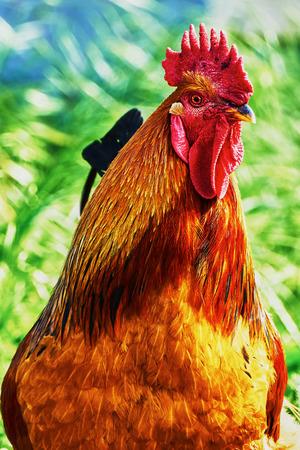 Wonderful cock in the village street