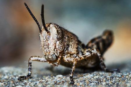 langosta: Larvas de langosta peque�a en el jard�n de verano