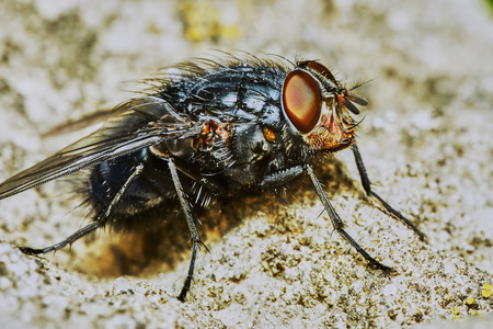 rest day: Gray fly sat down to rest on a hot day