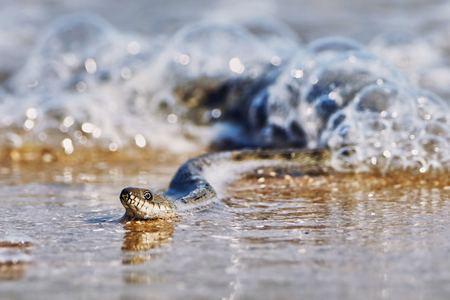 creep: Water snake on the Bay summer day Stock Photo