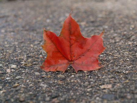 underlying: Red autum leaf underlying on black asphalt       Stock Photo