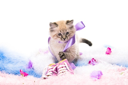 Kitten on New Years blue fluffy coating accessories photo