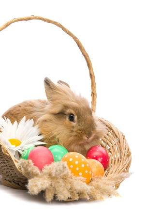festive Easter Bunny is sitting in a basket with colored eggs on a white background photo