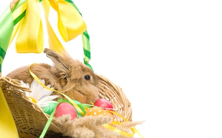 festive Easter Bunny is sitting in a basket with colored eggs on a white background