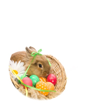 Easter Bunny in a basket with eggs and ribbons, isolated on white background Stock Photo - 13057421