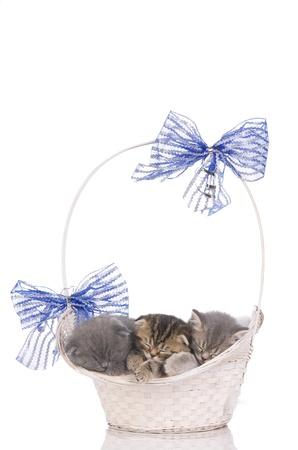 beautiful kittens sleeping in a basket photo