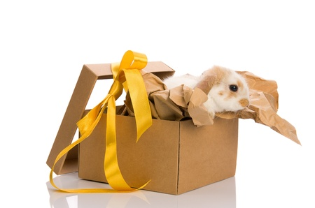 Beautiful Bunny in a gift box with a yellow ribbon isolated on white background photo