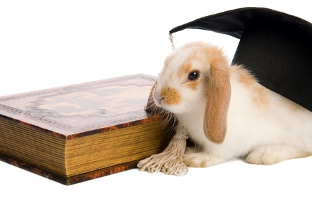small fluffy rabbit sitting on a book, isolated white background photo