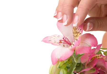 nail care for women's hands, isolated on white background photo