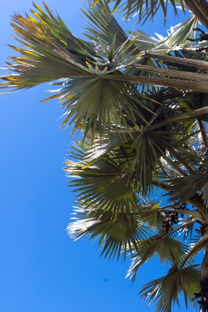 airiness: Palm leaves on the blue sky backgroung