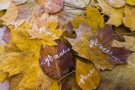 thankfulness: Autumn leaves with the words grace, hand-made with white paint, leaves arranged on a plane