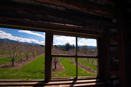 remnants: Window of old abandoned wooden house with the remnants of broken glass, overlooking the rows of fruit trees and snow mountain outside