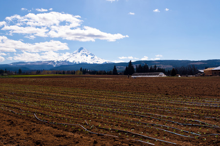 Plowed field with a greenhouse and the first shoots of plants and black plastic pipes for irrigation, amid fields, trees, hills, snowy mountains and cloudy sky photo