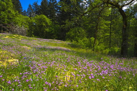 recurrence: Lilac flowers on the picturesque glade in the forest with green deciduous and coniferous trees, mossy stones with yellow moss on a hillside