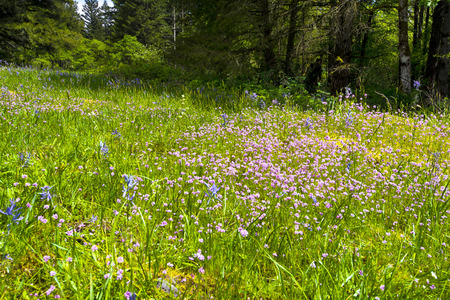 recurrence: Bright green grass with pink wildflowers with fine detailing, larger blue flowers and yellow moss on the rocks on a hillside on the edge of the lush summer forest with shade from tall trees bushes Stock Photo
