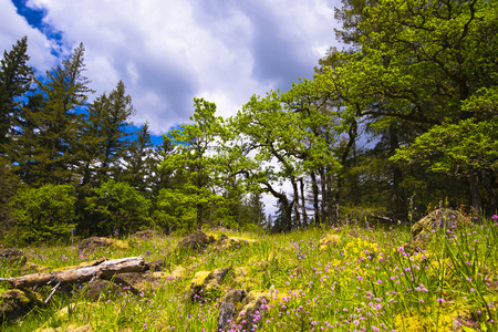 recurrence: Spring landscape of the timber, colorful flowers, green grass and yellow moss on the rocks on a hillside clearing in the woods on a background of trees iin perspective to the cloudy sky Stock Photo