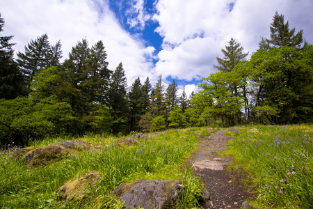 clearing the path: The path to the rocky slope clearing strewn with spring blooming flowers and bright green grass on background of trees of local forest and blue sky with big white cumulus clouds make beautiful landscape for recreation, enjoyment and walks