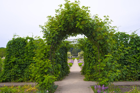 flower garden path: Gorgeous arch of living climbing plants with green succulent leaves frames the direct path, stretching into the horizon, flanked by green bushes and purple flowers grow.