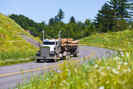 Large classic style truck with two chrome tailpipes on the bend in the road, carrying logs on the winding highway surrounded by lush green grass flowers and trees  On the background of evergreen trees and blue sky  photo