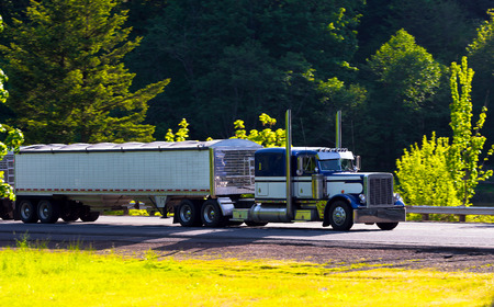 Large stylish semi truck with chrome accents in the sun carries two trailers on the highway with security fencing surrounded by bright green trees bushes and grass  Side view  Big Rig in dark blue and white colors has high direct exhaust pipes, extended c photo