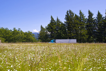 Great classic truck and trailer rides on the road that runs past the meadow with daisies and green grass with one hand and near evergreen trees on the other hand, against a cloudless blue sky  Unique mix of wildlife and modern technological progress