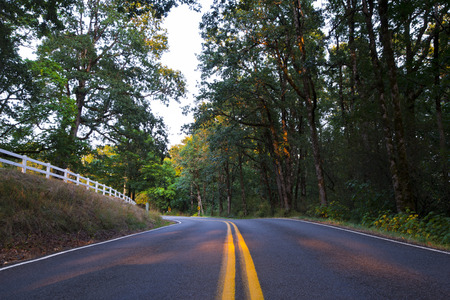 Road going for the turn with a yellow stripe in the center of the separation of asphalt road runs between the green trees photo