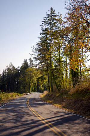both sides: Curving road with road markings with autumn colorful trees on the side of the road on both sides of the road. The sun illuminates the leaves of the trees and throws on the roadbed dense shade.