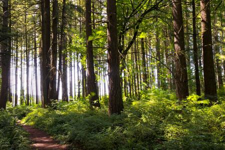 Route in een groene schaduwrijke woud van struiken en dikke stammen van bomen verlicht met het licht van de felle licht rand