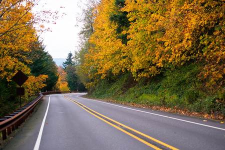 yellowing: Autumn landscape with winding road leaving for turn framed by a metal security fence and surrounded by beautiful golden autumn tree with yellowing leaves on both sides against the pale gray sky.