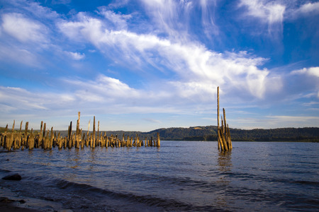 constitute: Rotten wooden piles of the old pier sticking out of the water on the Columbia River