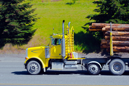 Classic yellow semi truck with a stabilization system from tipping over and day low cabin for the local traffic is transported on a trailer logs on the highway with large evergreen trees.