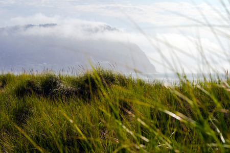 trampled: Tall grass on sand dunes coastal ocean waves from the wind goes against the huge mountains shrouded by fog which rolls its top, on the Pacific coast. Stock Photo
