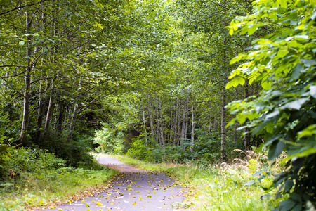 trampled: The path going into the thicket of green wild forest of young trees and bushes with grass in the first period of falling off the yellowed autumn leaves evokes sadness of the departing summer.
