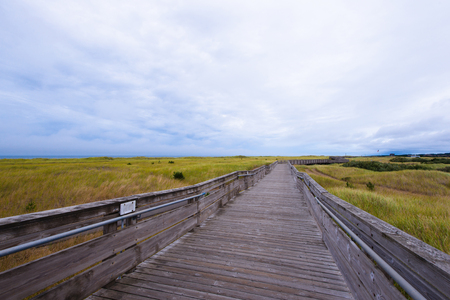 trampled: Long stretching a point on the horizon wooden flooring wooden pier with natural sea tree weathered and salted Ocean, which stretches along the track - a great attraction of the small town of Long Beach to the west of North America on the Pacific coast in  Stock Photo