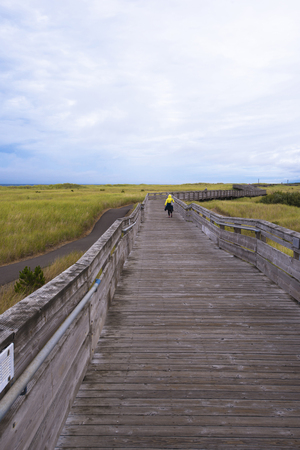 trampled: Long wooden walkway from the boardwalk and wooden railing stretches along the Pacific coast, the beach is overgrown with tall grass on the sand dunes. Pedestrian wooden walkway - a great place to rest and walk all visitors of Long Beach. Stock Photo