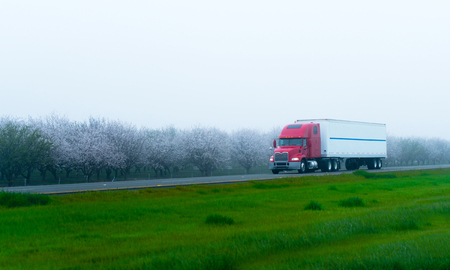 Stylish red semi truck with a trailer transporting long haul loads on a flat straight highway along the spring blooming gardens with fruit trees lost in the morning fog. Stock Photo