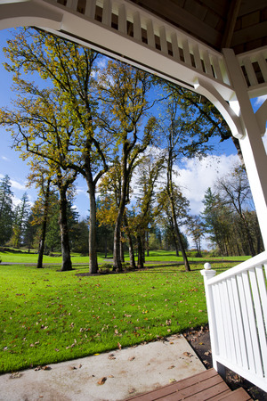 ruminate: Autumn trees with deciduous leaves in early autumn in the meadow with green lush grass on a sunny day. View tracery white gazebo with a roof and wooden flooring. Open space with a beautiful landscape.
