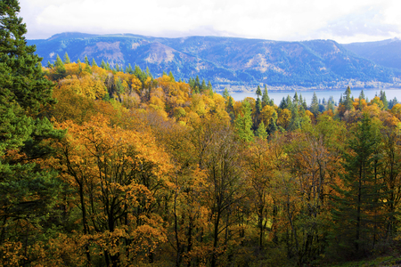 behold: Landscape with autumn trees with yellowed leaves in the forest massive on a hillside on the banks of the Columbia River in the protected recreation area of Columbia River Gorge, it is unique place of wildlife in North America. Stock Photo