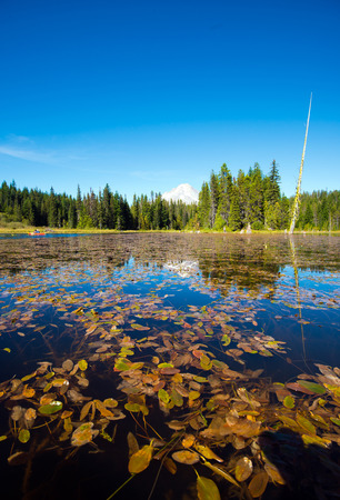 trillium: The unique enjoy of relaxing on the kayak at Trillium Lake, Oregon, reflection of the sparkling green of the surrounding woods and lake patches of sunlight on a quiet surface of transparent water through which the swaying stalks of water lilies covering l Stock Photo