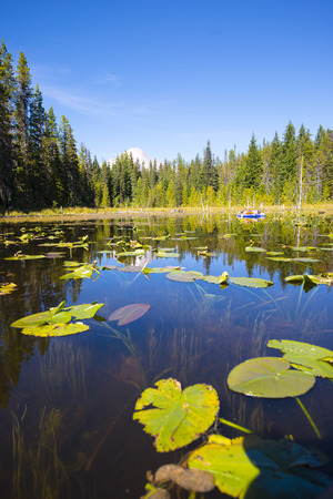 trillium lake: The unique blend of relaxing on the boat at Trillium Lake, reflection of the sparkling green of the surrounding woods and lake patches of sunlight on a quiet surface of transparent water through which the swaying stalks of water lilies covering lake green