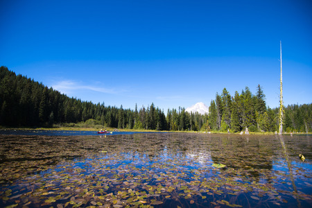 Unforgettable impressions will give you drifting kayak in the middle of an incredibly beautiful Trillium lake in Northwest of Oregon, overgrown with water lilies leaving thin stems in clear water against a wall of forest trees, standing right in the water Stock Photo
