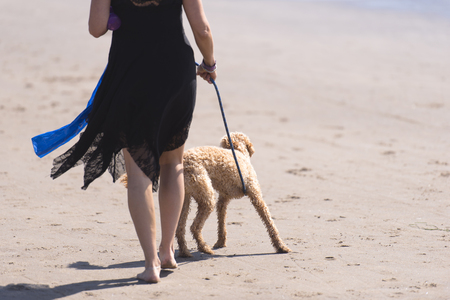 Curly shaped girl in a stylish little black dress with fashionable cut elements and shapely barefoot legs walks on a leash poodle dog in brown color on the sandy shores of the Pacific Ocean in Oregon
