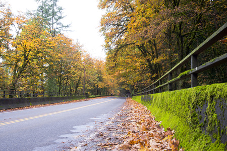 The fallen leaves on the sidelines of a wet road through the bridge with green moss-covered fence railings, through the row of yellow forest autumn trees resting on the arch road tunnel.