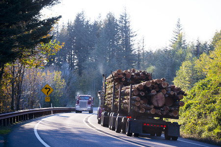 destined: Huge powerful big rig semi truck with two flat bed trailers transporting a bunch of large logs destined for processing to the boards, on a winding forest road with trees and traffic signs in sunlight. Stock Photo