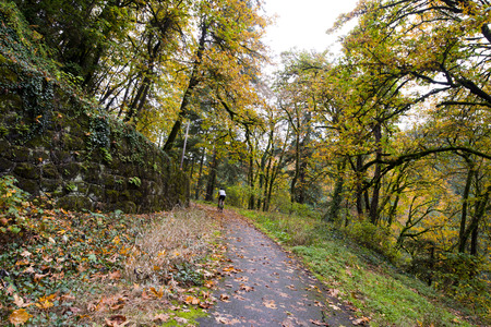 enclosing: Cyclist moving route in the forest autumn path laid along the cliffs, surrounded by yellowed trees and framed by fallen yellow leaves along winding ivy-covered stone wall, enclosing the path of landslides.