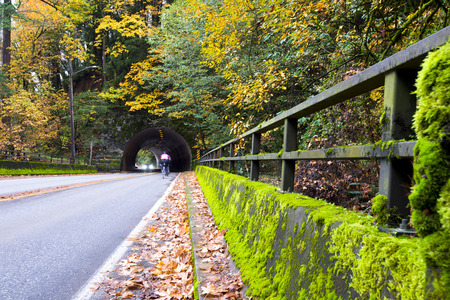 The road passing through the semi-circular arched tunnel in which cyclists enter and exit vehicles laid in the rock in the autumn forest with yellow trees and covered with bright green moss with the bridge railing and fallen leaves